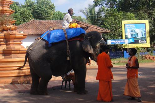 Ну как же без слонов