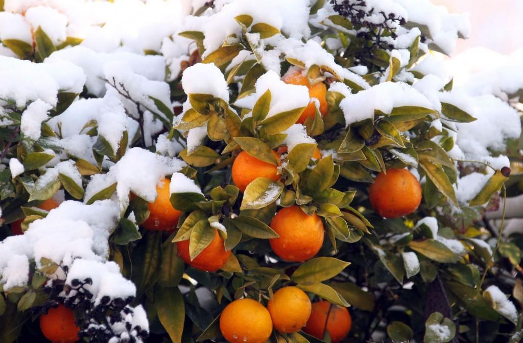Новый год в Абхазии от 15800 рублей