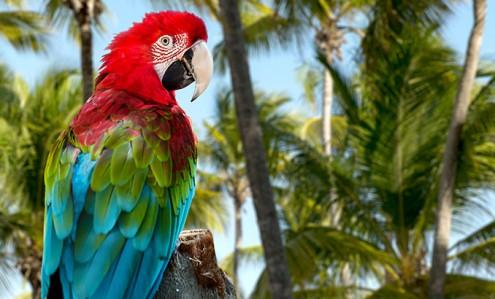 доминикана птицы